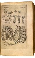 Bones of the thorax