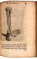 Tibia, fibula and foot bones