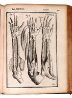 Muscles of the arm, forearm