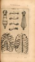 Ribs, sternum, clavicle and spine