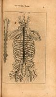 Spinal nerves, spinal cord and spine