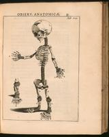 Infant skeleton, abnormal; polydactyly