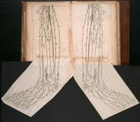 Nerves of the legs and feet