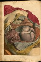 Adominal organs, uterus and placenta and fetus of a pregnant woman