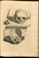Skull: frontal bone, facial bones, sphenoid bone