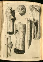 Femur, tibia and fibula