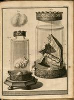 Jar containing a mandible, jar containing a human fetus, buccal epithelium