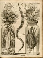 Jars containing fish, squid