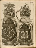 Jars containing frogs, snake