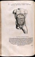 Abdomen, liver, stomach and intestines
