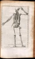 Skeleton, and muscles
