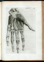 Muscles and bones of the hand