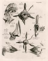 Facial muscles, eye and ear
