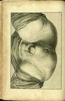 External genitalia, female, during delivery of the fetus