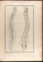 Spine and sacrum