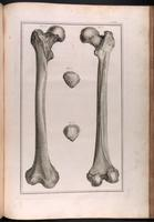 Femur and patella