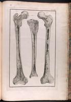 Cross-section of femur and tibia