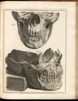 Skull and mandible