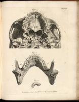 Base of skull, maxilla, mandible, cartilage  and teeth