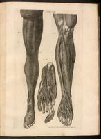 Muscles, arteries and veins, and lymphatic venules of the leg and foot