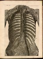 Iliac and pre-aortic lymph nodes, lymphatic venules and thoracic duct, thorax and pelvis