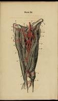 Arteries of the thigh