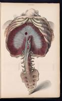 Thorax, spine and sacrum
