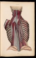 Back muscles, ribs and intercostal muscles