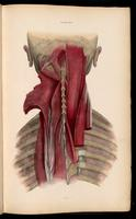 Muscles of the back of the neck