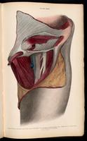 Dissection of the groin