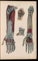 Dissection of the arm and hand