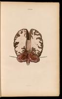 Brain, cerebellum and spinal cord