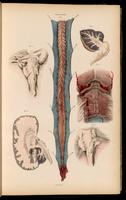 Dissection of the brain and spinal cord