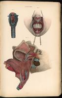 Dissection of the face and neck