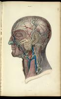 Lymphatic nodes and vessels of the head and neck
