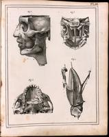 Skull, facial and masticatory muscles, tongue