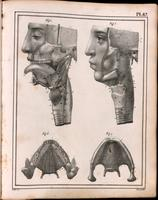 Dissection of the mouth, oropharynx and larynx