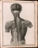 Muscles of the back and neck