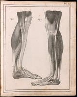 Muscles and tendons of the leg and foot