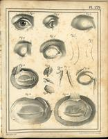 Eye, eyelid and lacrimal apparatus