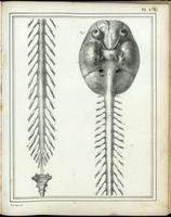 Brain, spinal cord and spinal nerves