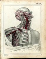 Arteries of the head, neck, and axilla