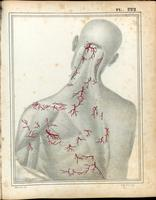 Superficial arteries of the neck and back