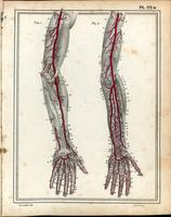 Arteries of the arm and hand