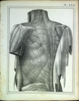 Superficial lymphatic drainage of the back