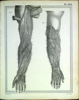 Lymphatic drainage of the arm