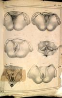 Female perineum and vulva