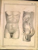 Surface anatomy, male abdomen, pelvis and genitalia