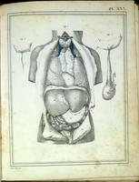 Abdominal and thoracic organs, testis of a neonate