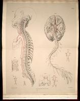 Arteries of the brain and spinal cord, anomalies of arteries of the brain